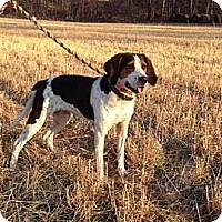 Adopt A Pet :: PENNY - Scottsburg, IN