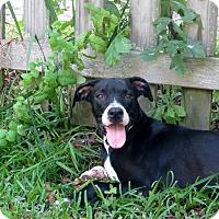Adopt A Pet :: Annie Oakley - Albany, NY