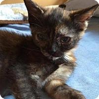 Adopt A Pet :: Coral - Hamilton, ON