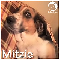Adopt A Pet :: Mitzie - Pittsburgh, PA