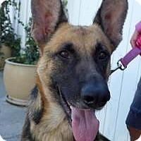 Adopt A Pet :: zumba - Costa Mesa, CA