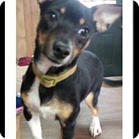 Adopt A Pet :: Rocky - Marion, KY