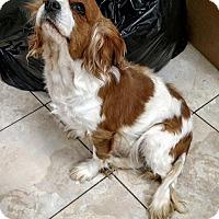 Adopt A Pet :: Rosa - Newark, DE