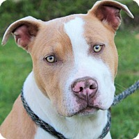Adopt A Pet :: TOM-Low fees/Neutered/Chipped - Red Bluff, CA