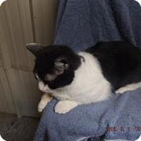 Adopt A Pet :: Miri - Florence, TX