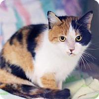 Adopt A Pet :: Roxy - Markham, ON
