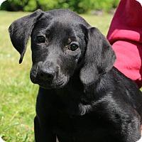 Adopt A Pet :: Tia - Glastonbury, CT