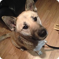 Adopt A Pet :: Raine - Pitt Meadows, BC