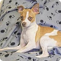 Adopt A Pet :: Betty - Winters, CA