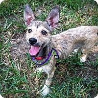 Adopt A Pet :: Rainey - Memphis, TN