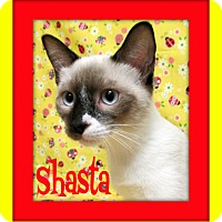 Adopt A Pet :: Shasta - Tracy, CA