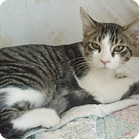 Adopt A Pet :: Russ - Germansville, PA