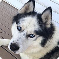 Adopt A Pet :: Icy - Cincinnati, OH