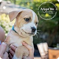 Adopt A Pet :: Oscar - Marlton, NJ