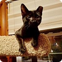 Adopt A Pet :: Boo Bear - Colmar, PA