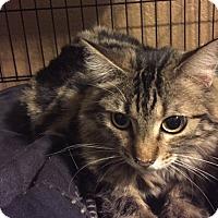 Adopt A Pet :: JELLI BEAN - Glendale, AZ