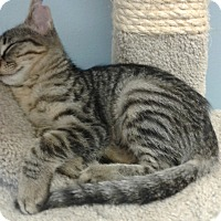 Adopt A Pet :: Maci - Lake Charles, LA