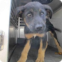 Adopt A Pet :: BUCK - Conroe, TX