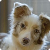 Adopt A Pet :: Miss Ruby - Colorado Springs, CO