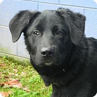Adopt A Pet :: Bo - Randleman, NC