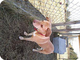 Labrador Retriever Mix Dog for adoption in Valley Falls, Kansas - Jozee