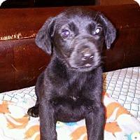 Adopt A Pet :: Thorn - Raleigh, NC