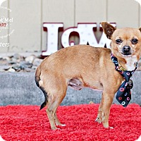 Adopt A Pet :: Butters - Shawnee Mission, KS