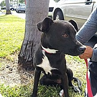Adopt A Pet :: Princess - Coral Springs, FL