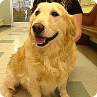 Adopt A Pet :: Ginger - Foster, RI