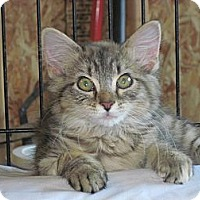 Adopt A Pet :: Chelsea - Warren, OH