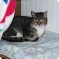Adopt A Pet :: Kayle - Hamburg, NY