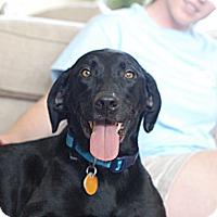 Adopt A Pet :: Bailey - Homewood, AL