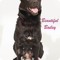 Adopt A Pet :: BAILEY-ADOPTED! - North Vancouver, BC