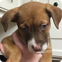 Adopt A Pet :: Calypso#05F - Orlando, FL
