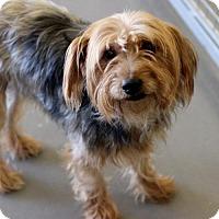 Adopt A Pet :: Davinci - Atlanta, GA