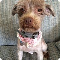 Adopt A Pet :: Ginger - Buena Park, CA