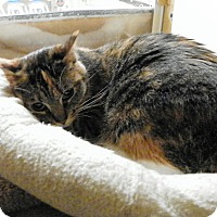 Adopt A Pet :: Vivi - Riverside, CA
