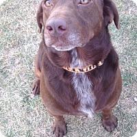 Adopt A Pet :: RUSTY - Tiffin, OH