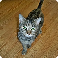 Adopt A Pet :: Molly (Courtesy Listing) - Richmond, VA