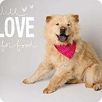 Adopt A Pet :: Maizy - Apache Junction, AZ