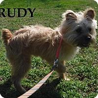 Adopt A Pet :: Rudy - Batesville, AR