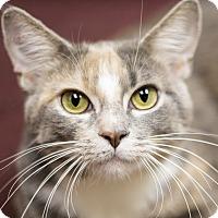 Adopt A Pet :: Ceres - Chicago, IL