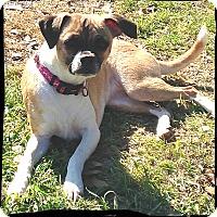 Adopt A Pet :: Louise - Johnson City, TX
