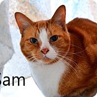 Adopt A Pet :: Sam - Hamilton, MT