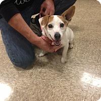 Adopt A Pet :: Bits - Delaware, OH