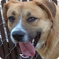 Adopt A Pet :: Brenda - MINNEAPOLIS, KS