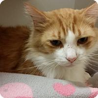 Adopt A Pet :: Kye - Chula Vista, CA