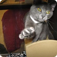 Adopt A Pet :: Czar - Logan, UT