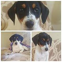 Adopt A Pet :: Sophia - Lexington, KY