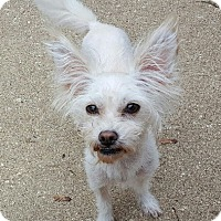 Terrier (Unknown Type, Small) Mix Dog for adoption in Rockford, Illinois - Stewie